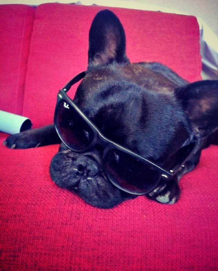 Chuckie our #french #bulldog would like you wish you all a chilled #weekend! Stay safe ;)