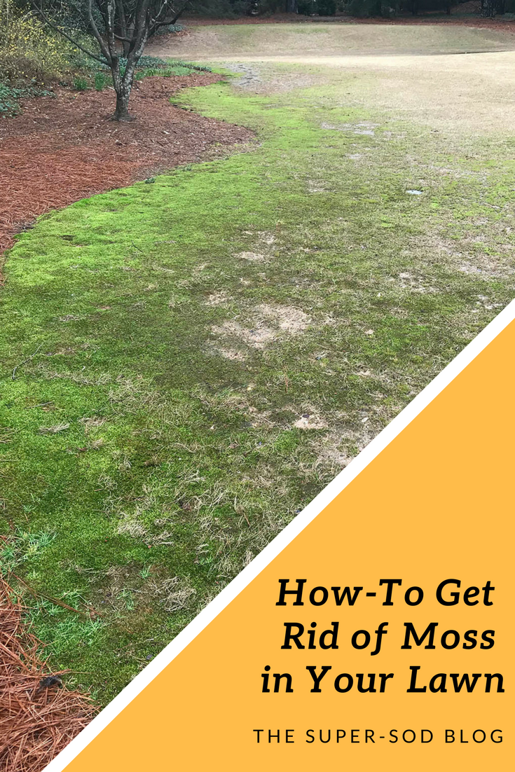 How To Get Rid Of Moss In Your Lawn 2