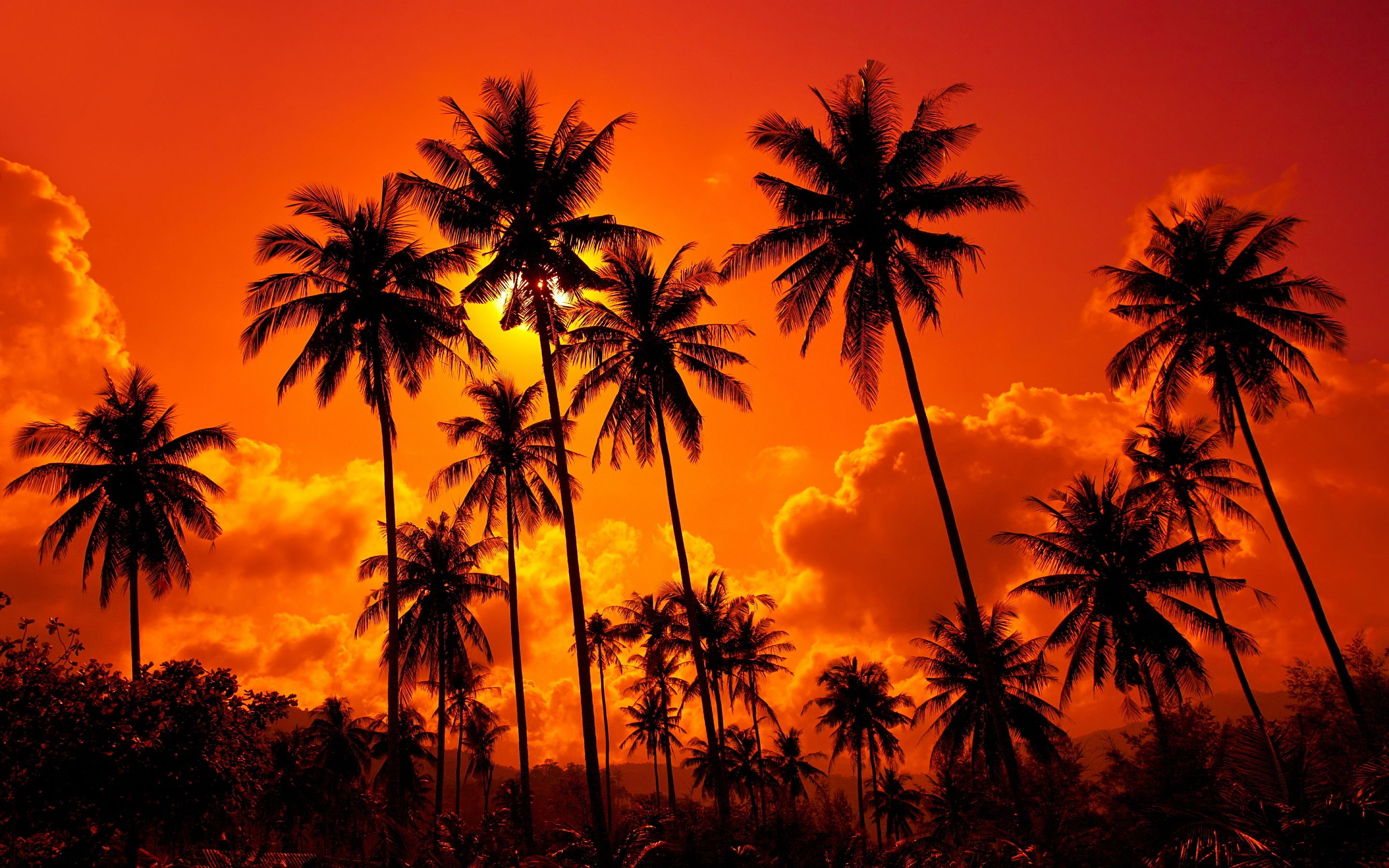 Red sunset palms Wallpapers Pictures Sunset