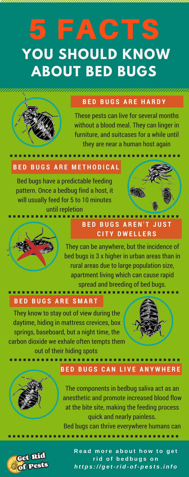 Bed Bug Treatment Bed bugs, Kill bed bugs, Bugs