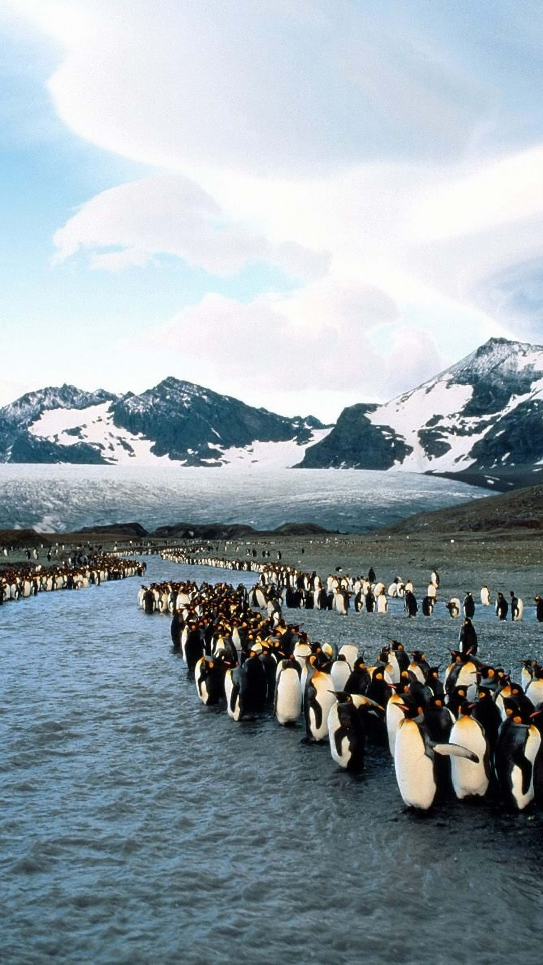 penguins north mountains flock colony #iphone #6 #wallpaper | iphone