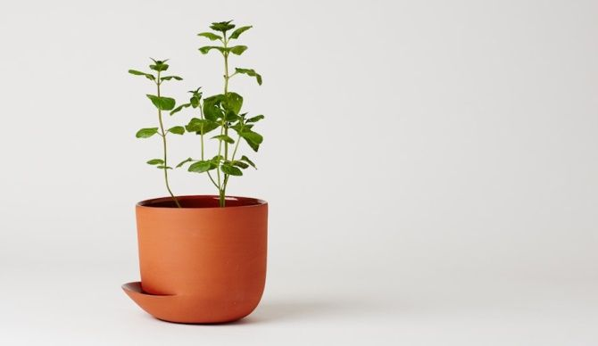 Anderssen & Voll Indoor garden for Mjølk #greenplant #indoorgarden