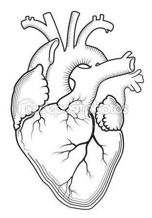 Anatomical heart drawing outline ahd04