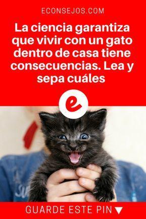 La Ciencia Confirma Que Es Lo Que Sucede Cuando Vive Con Un Gato En Casa Areneros Para Gatos Casita Para Gatos Gatos