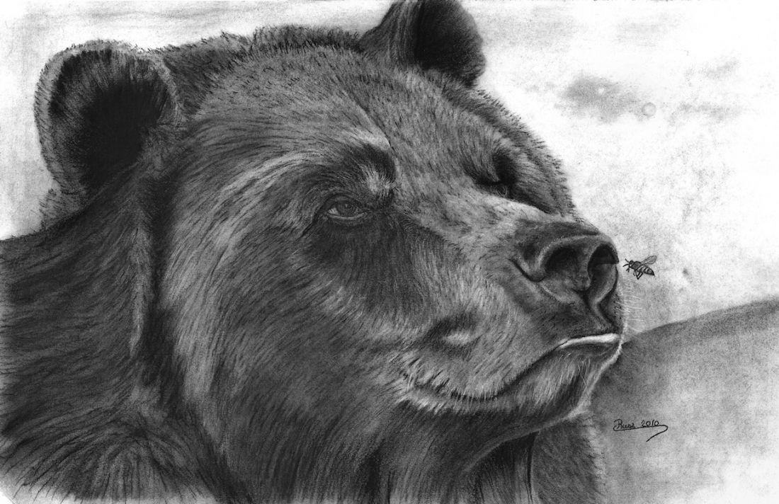 конце картинка медведя карандашом на рабочий часто помогает смешарикам