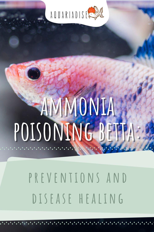 de83667abd56555be55744e884ea22ba - How To Get Ammonia Out Of My Fish Tank