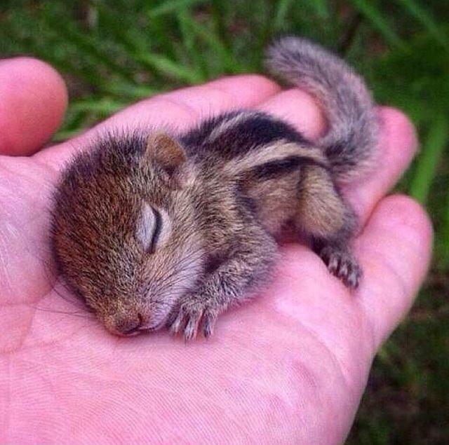 Baby Chipmunk. <3