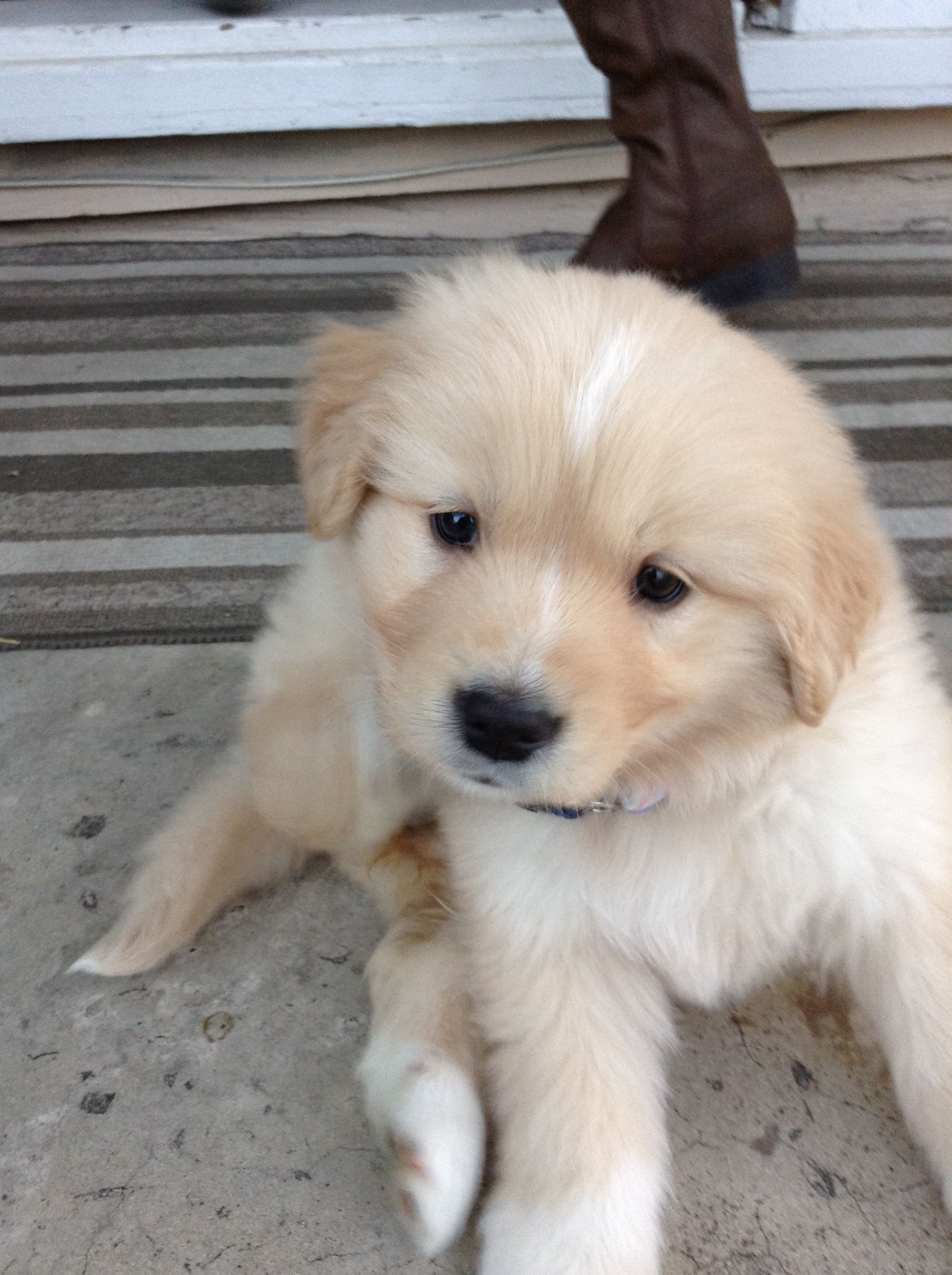 Her Name Is Ginger And She Is So Cute Puppies Cute Dogs