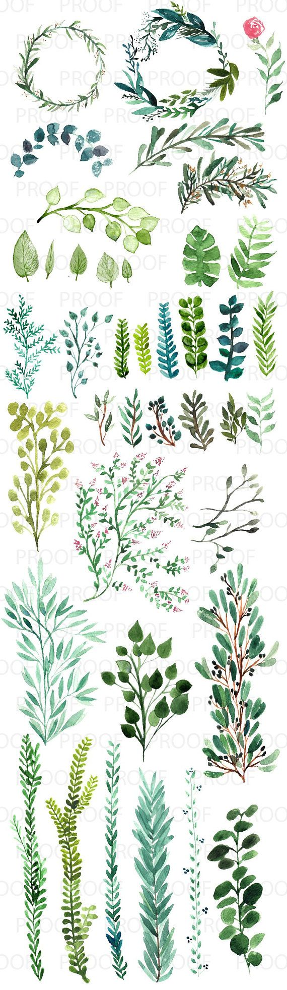 40 Watercolor Botanical Greenery Clipart Download Commercial Use