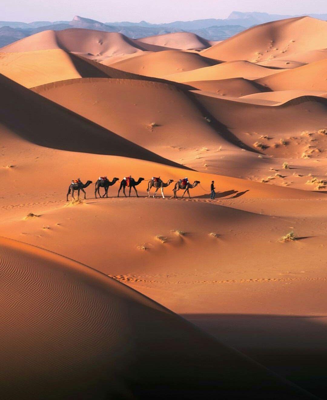 sahara desert images - 736×833
