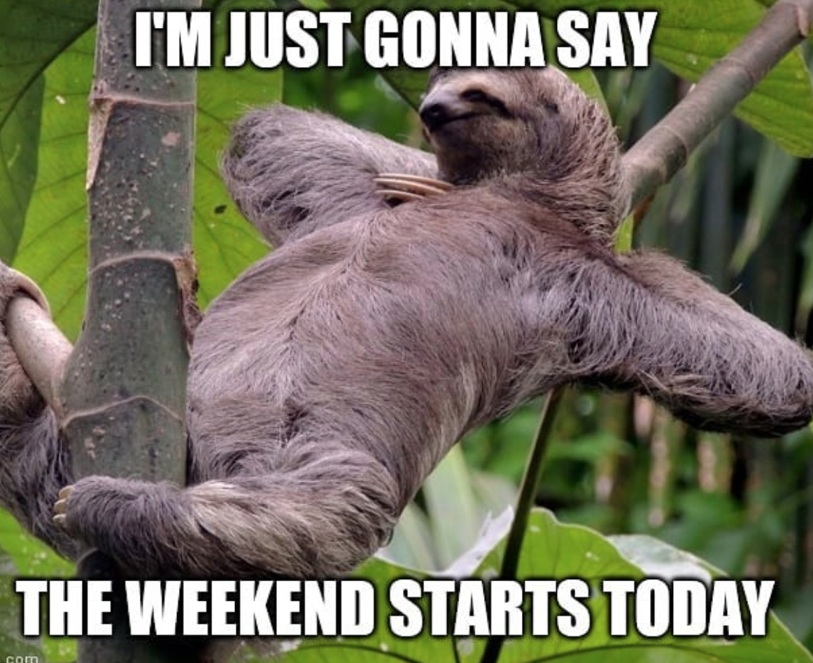 Popsloth Weekend Meme in 2020 | Sloths funny, Sloth meme, Spirit animal