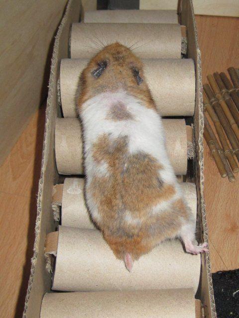 fertig ist die hamsterbr cke hamster luna pinterest meerschweinchen hamster spielzeug und. Black Bedroom Furniture Sets. Home Design Ideas