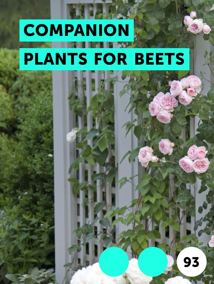 Companion Plants For Beets Planting Grass Plants Grass 400 x 300