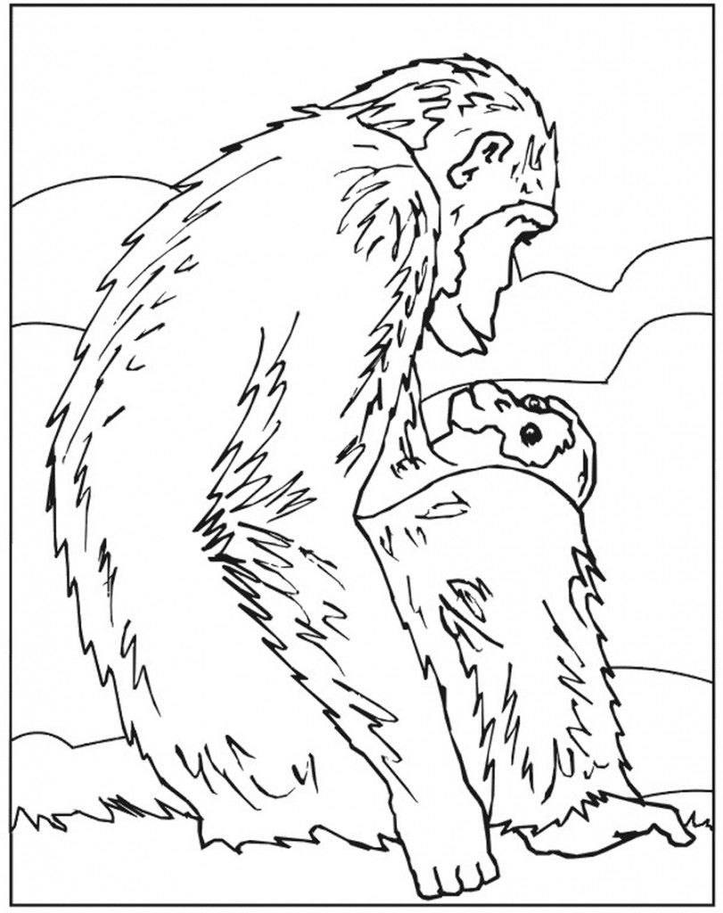 Free Printable Chimpanzee Coloring Pages For Kids Horse Coloring