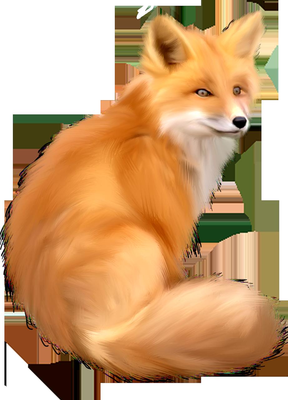 Картинки для детей лис