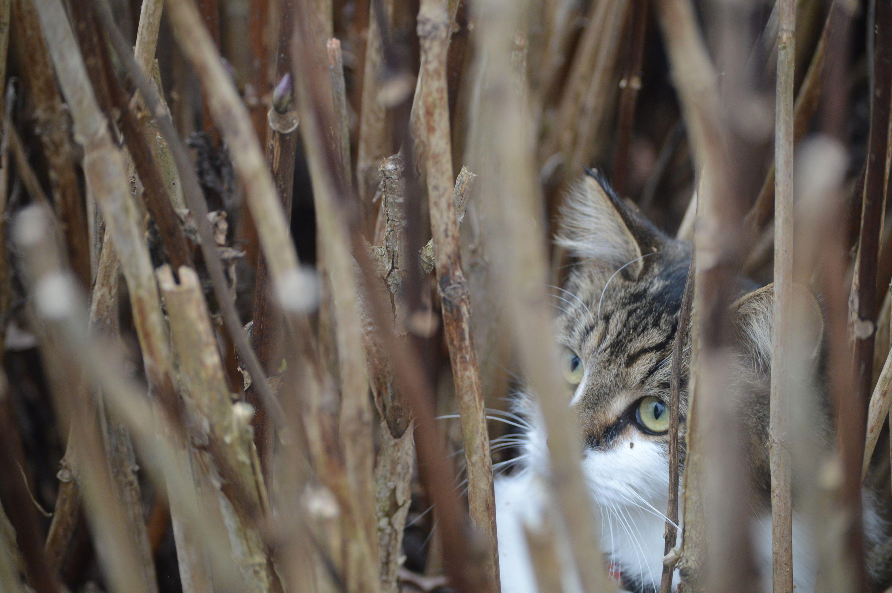 Pin by Jordan ) on catsssss Animals, Cats