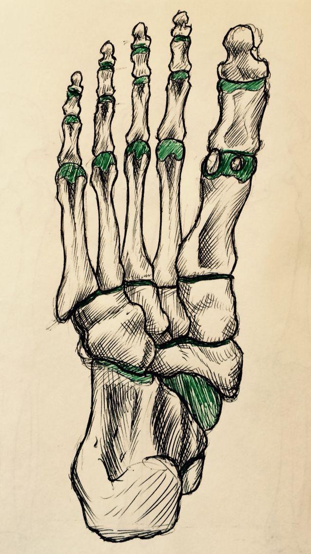 Plantar view of foot bones | Anatomy & Physiology | Pinterest ...