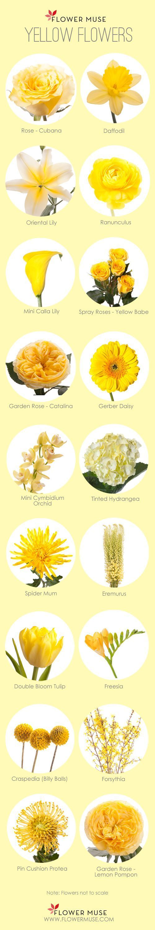 Our favorite yellow flowers member board bride bridal party we share our favorite yellow flowers from garden roses to tulips these blooms are perfect for your wedding or event mightylinksfo