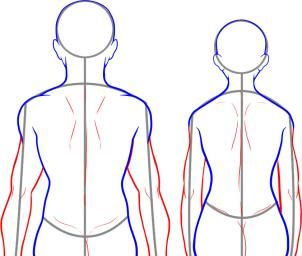 How To Draw A Back Step 8 Guided Drawing Human Body Drawing Nature Sketch