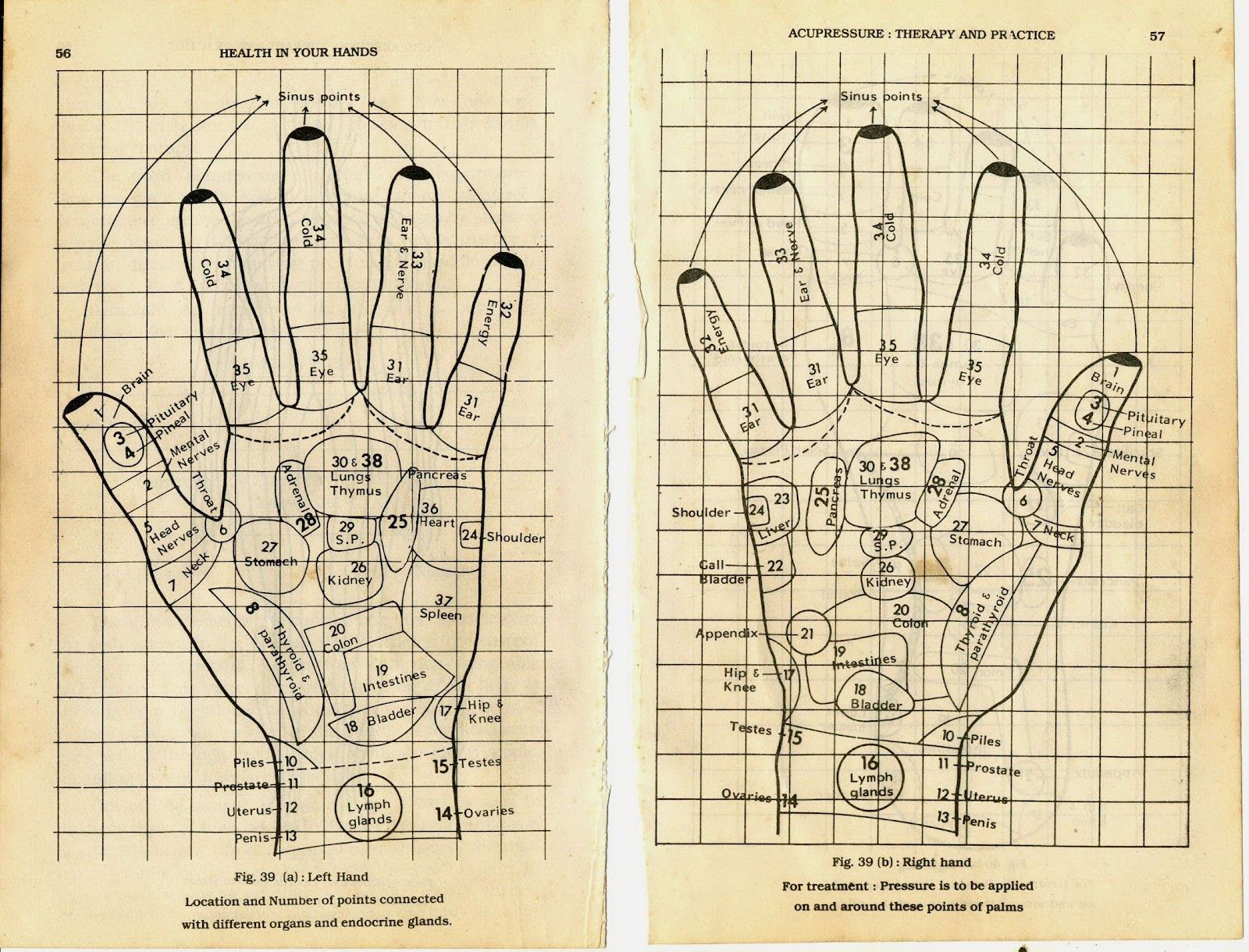 pressure points on the feet | Massage pressure points ...  |Acupressure Points Chart Toes