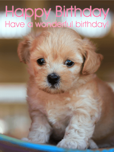 What S Sweeter Than A Puppy This Happy Birthday Card If You Have