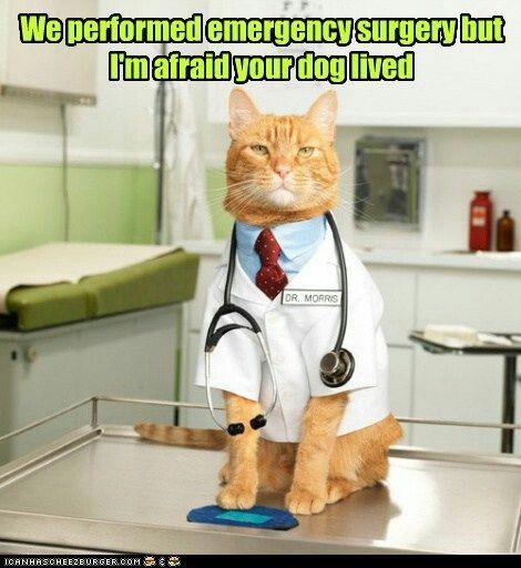 Pin by Kelsey Reutenauer on Nurse Humor | Cat puns ...