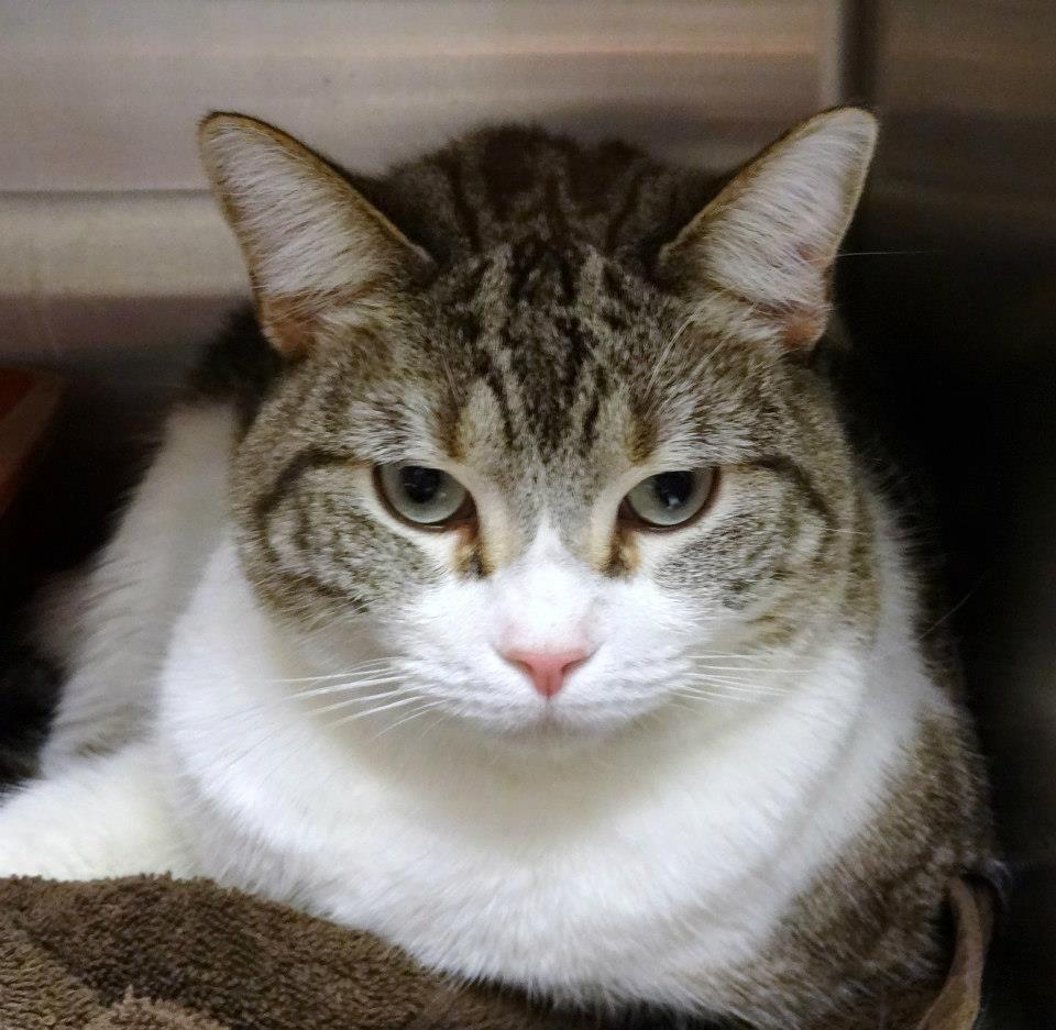 Adopt MILLIE on No kill animal shelter, Cute animals