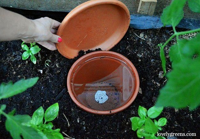 Olla Watering Pots  a lowtech solution that keeps plants watered in dry conditions Also saves time and water The Effective Pictures We Offer You About Gardening planters...