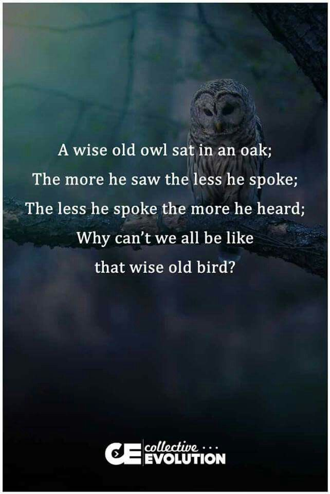 Wise Old Owl   Positive words, Special words, Wise