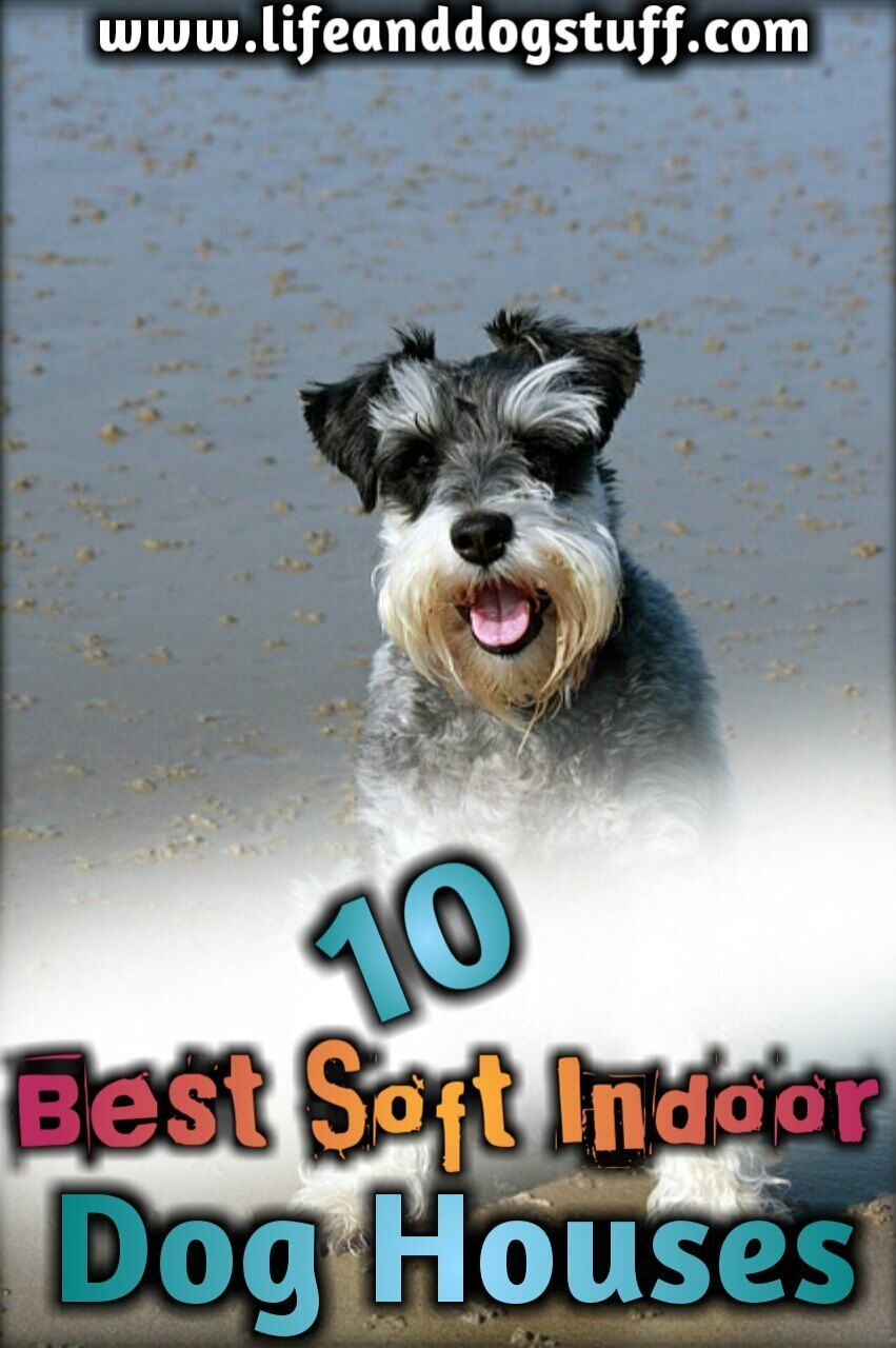 10 Best Soft Indoor Dog Houses For Small Dogs Cute dog