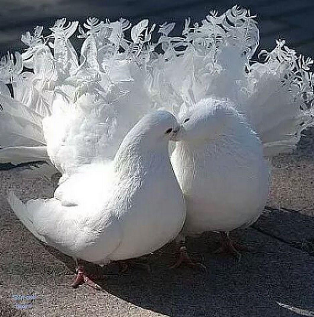 Голуби целуются на крыше, ебут связанных блондинок в попки