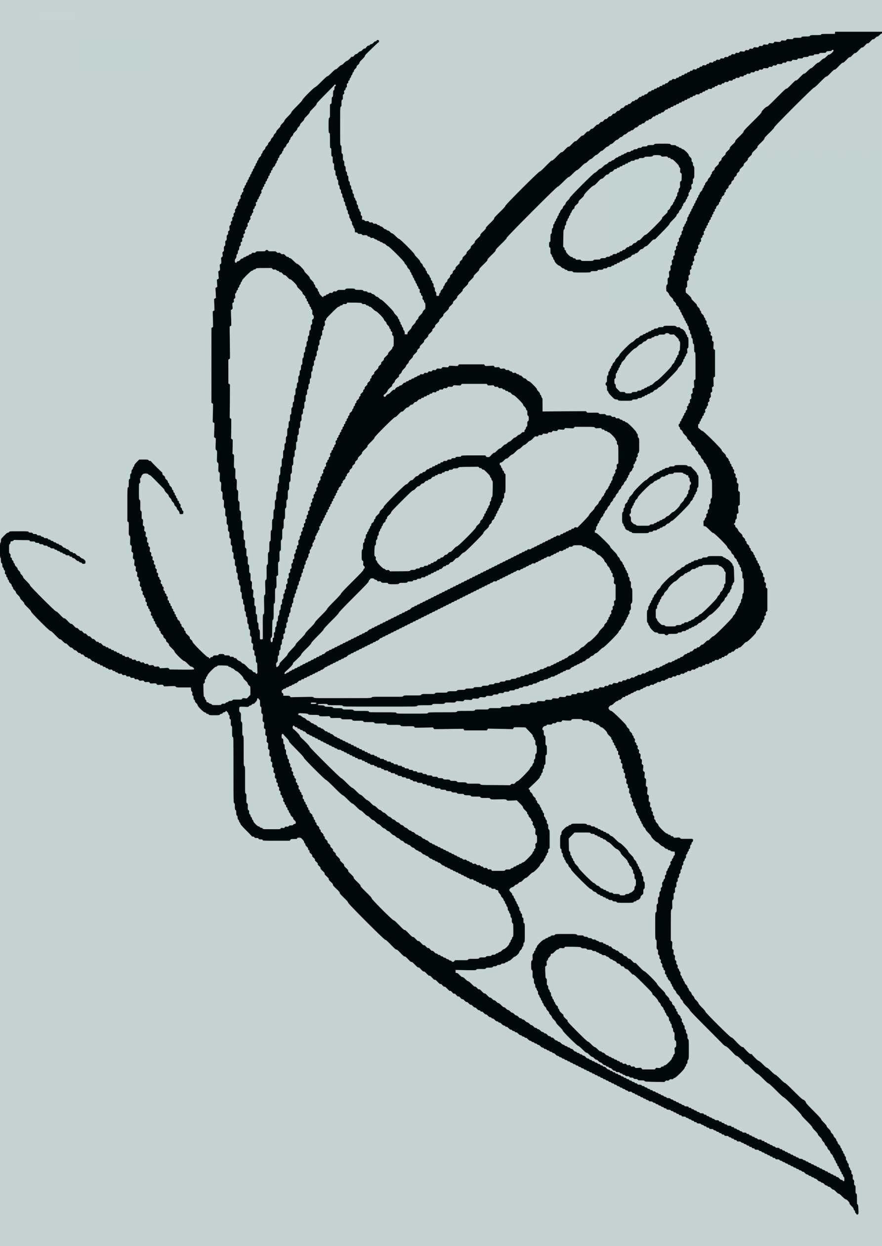 Pin By Malgorzata Samsel On Motyl Butterfly Template Butterfly Drawing Mandala Drawing