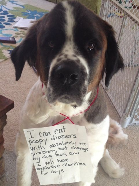 Dog Shame I Can Eat Poopy Diapers With Absolutely No Animal Shaming Dog Shaming Family Pet