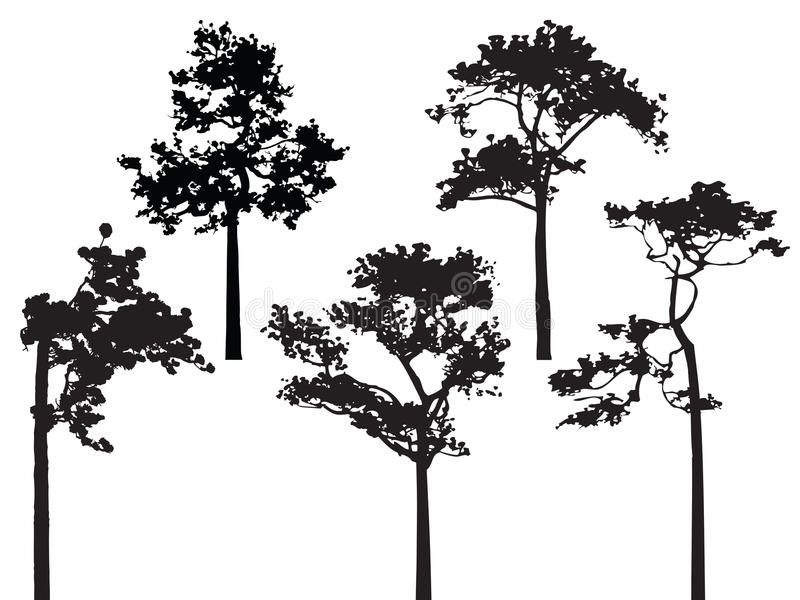 Set Of Five Pine Tree Silhouette Vector Bw Sponsored Ad Affiliate Pine Bw Vector Set Pine Tree Silhouette Oak Tree Silhouette Tree Silhouette