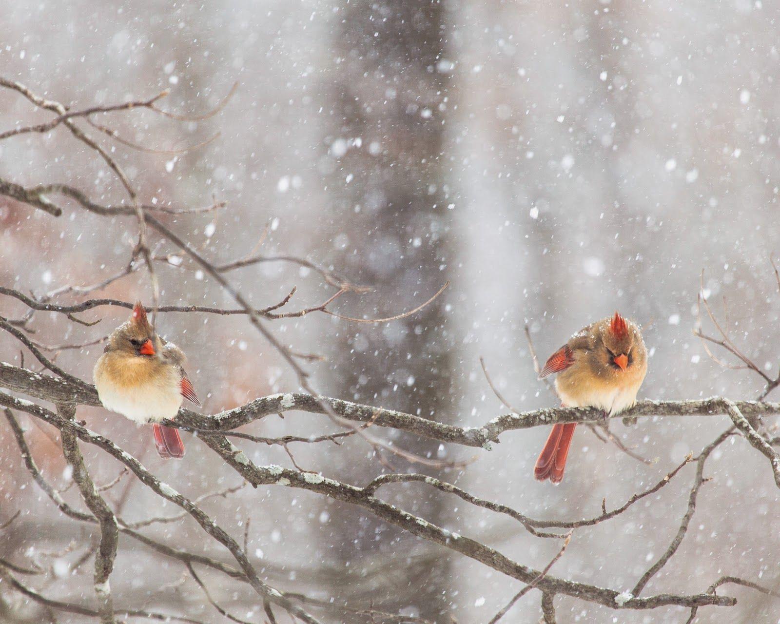 التصوير الفوتوغرافي الرائع للطبيعة الساحرة Hd مداد الجليد Photo Snow Day National Geographic