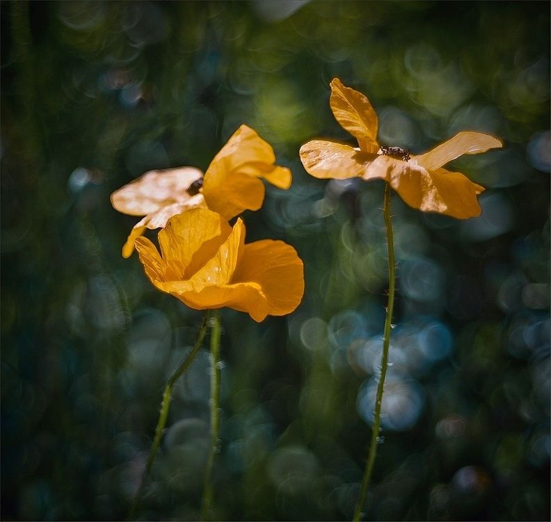 Dancers in the yellow skirts by Magda Wasiczek on 500px