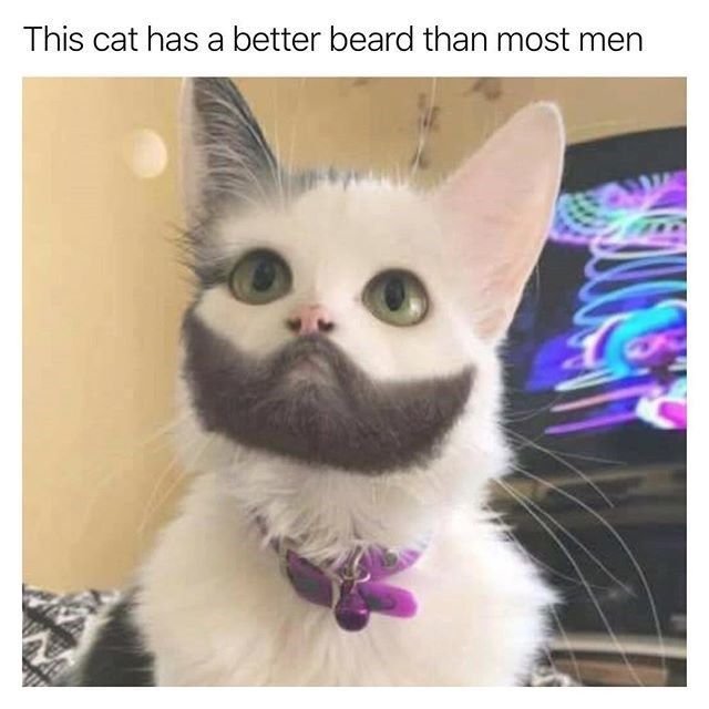 When Your Cat Needs To Shave Cat And Dog Memes Funny Cat