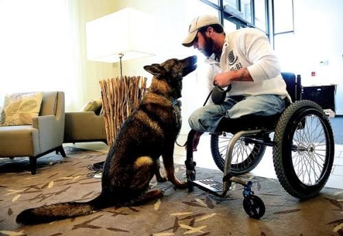 Army Cpl. Jesse Murphree HEROES Service dogs, Dogs, Ptsd