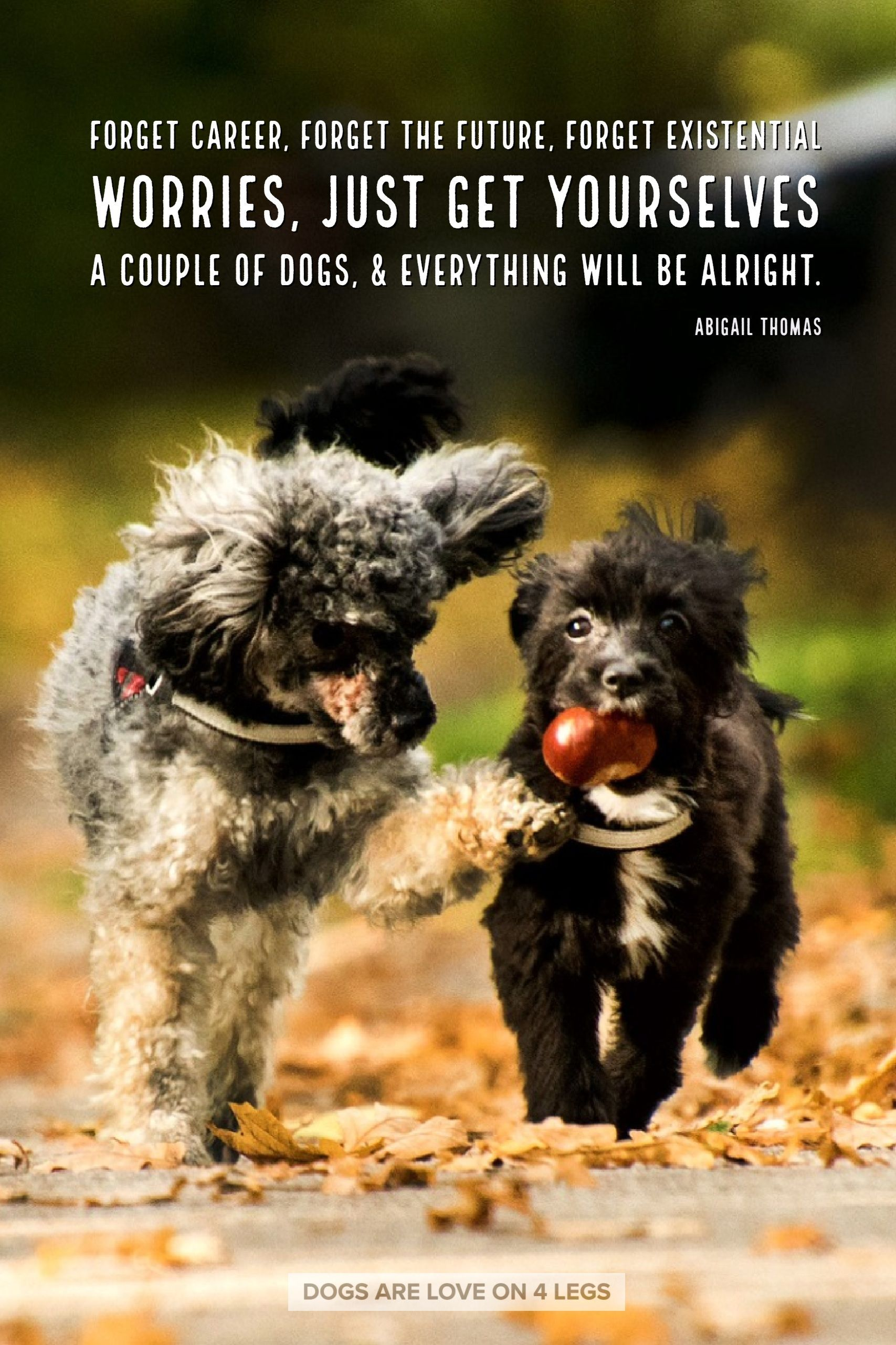 Dog Quote Forget Career Forget The Future Dog Dog Quotes