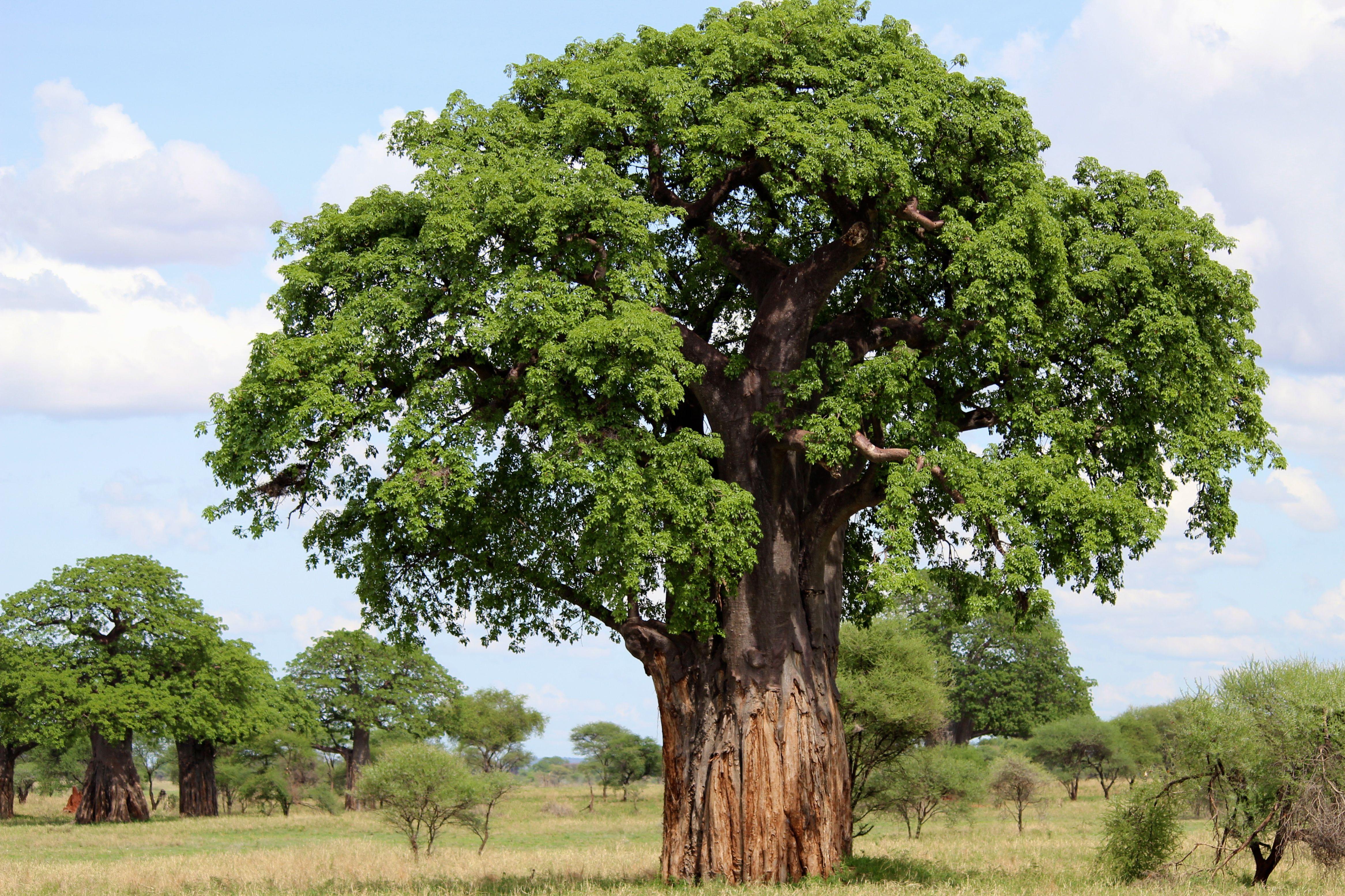 деревья фотографии с названиями