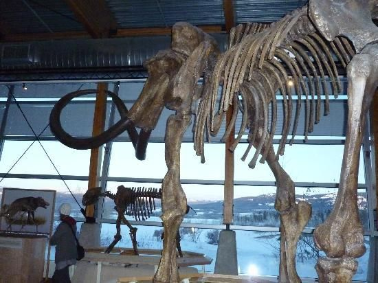 Yukon Beringia Interpretive Centre: Yukon Beringia Interpretive Centre Reviews