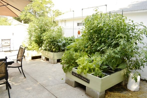 Square Foot Garden first try! - Garden Designs - Decorating Ideas - HGTV Rate My Space