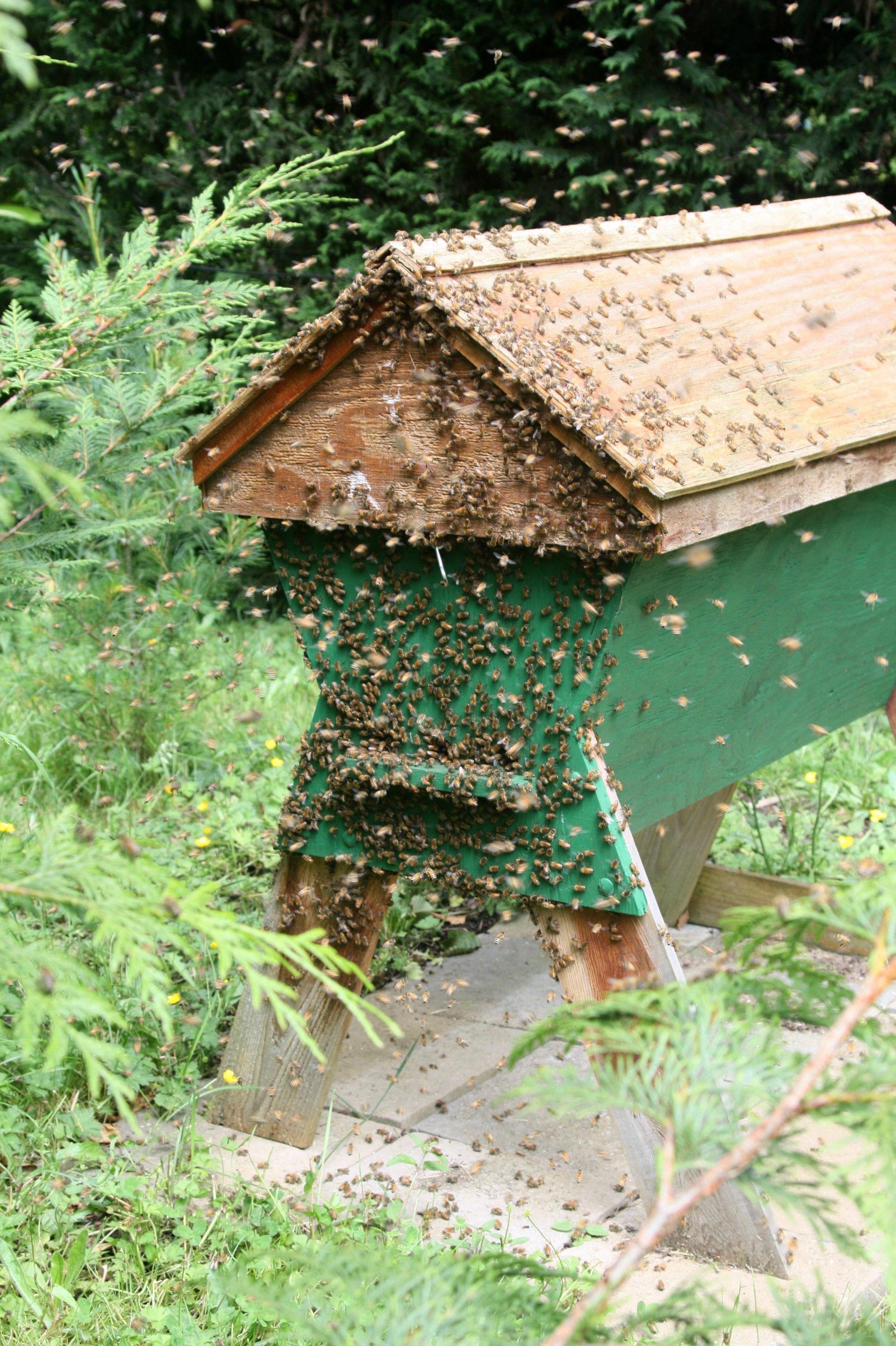 Bon Top Bar Hive Front