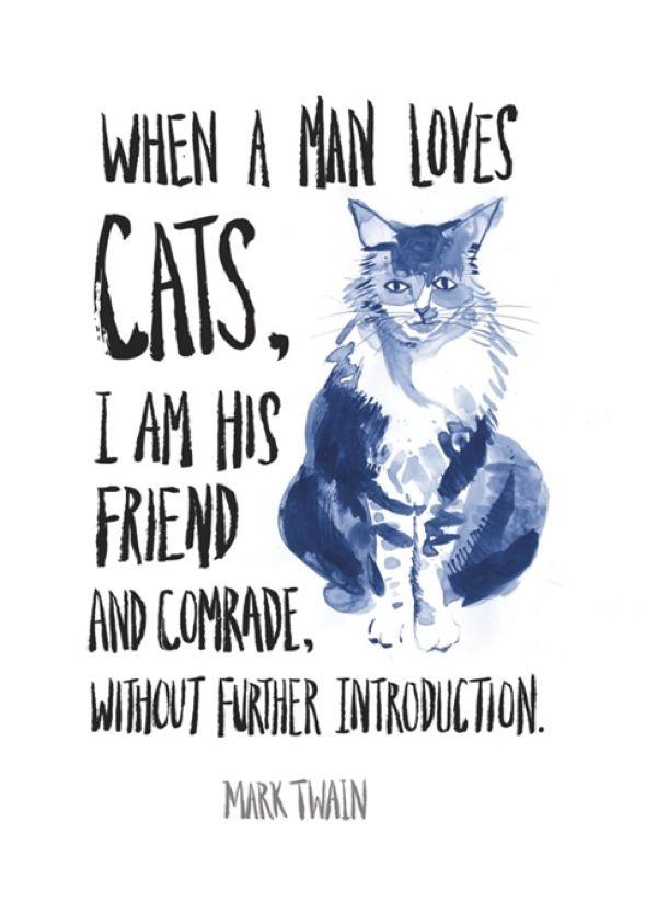 Les cinq types de relations qu'un chat peut avoir avec son maître