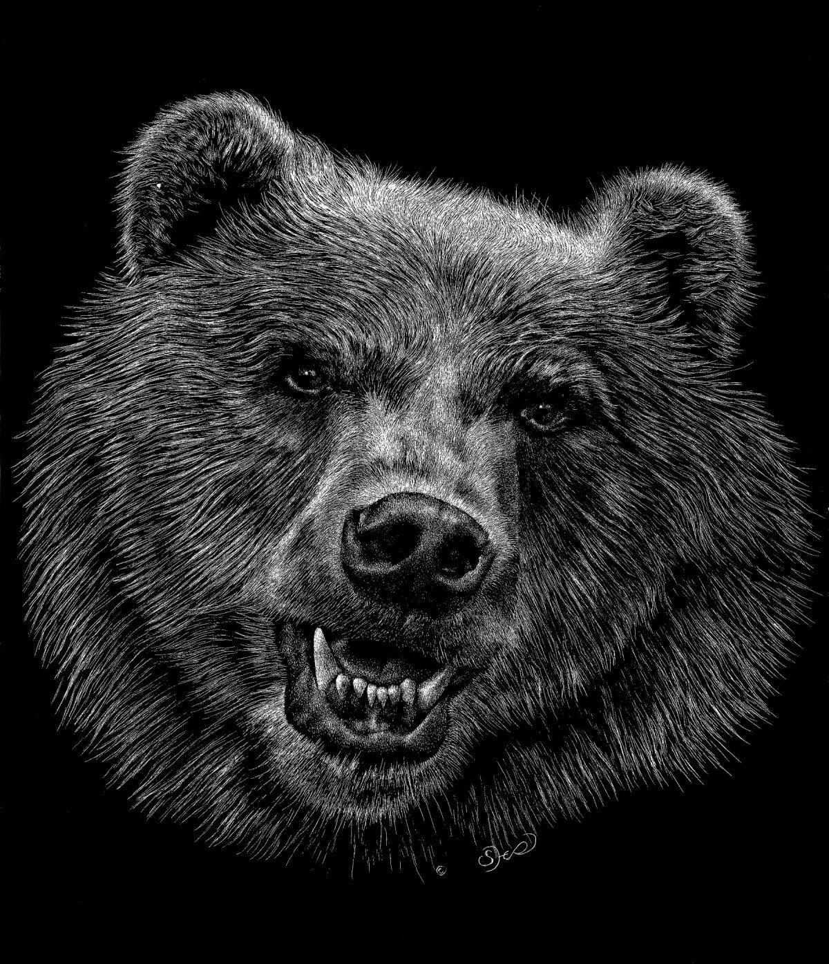 Картинка медведя карандашом на рабочий