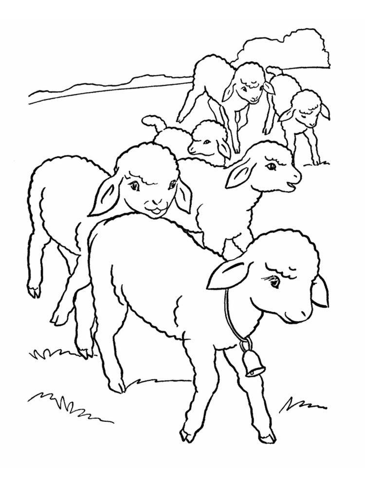 Sheep And Lamb Coloring Pages Farm Animal Coloring Pages Animal Coloring Pages Animal Templates