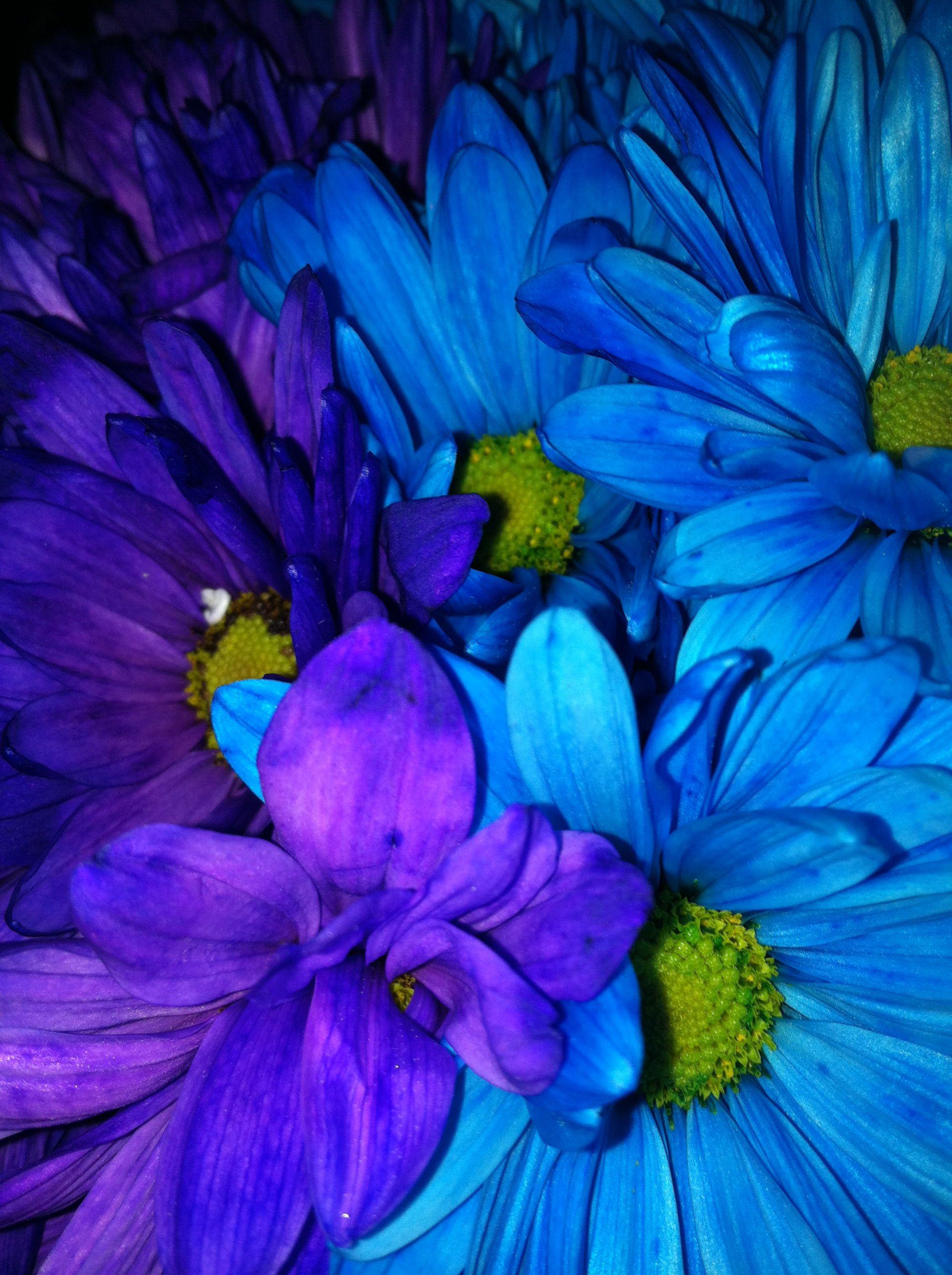 Purple Blue Flowers Photography Profile Pinterest Blue