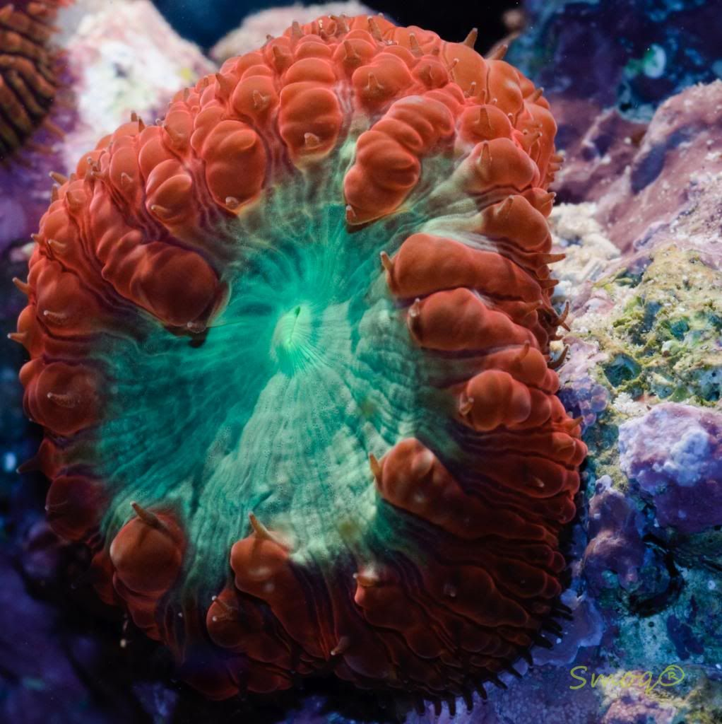 Zoanthids and palys