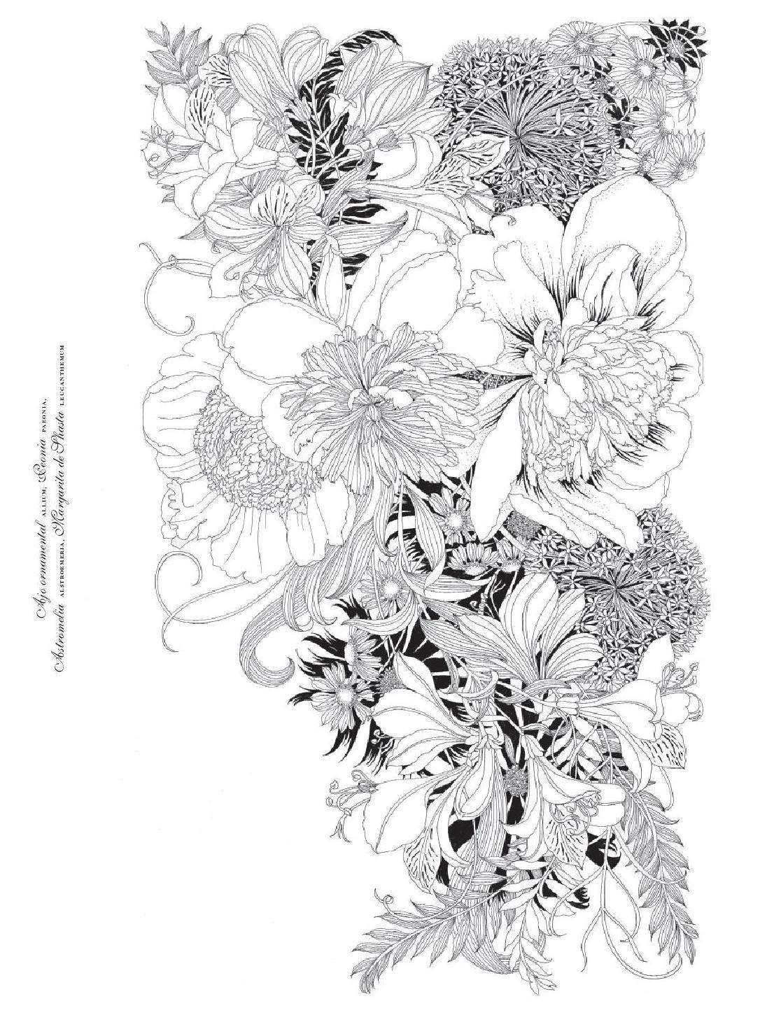 Floribunda. Flores para pintar / mtm editores   Años y Flores