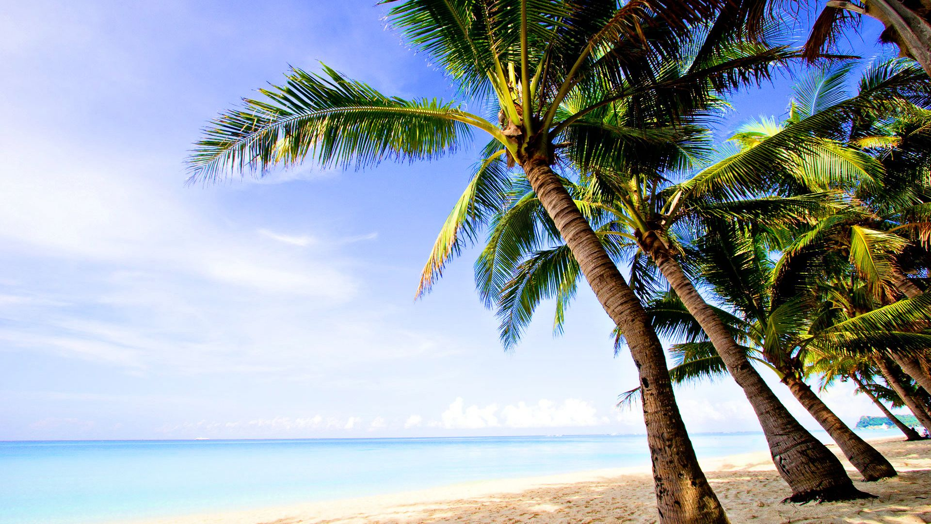 Coconut Trees Wallpaper With Beach 1920x1200px Trees Beach